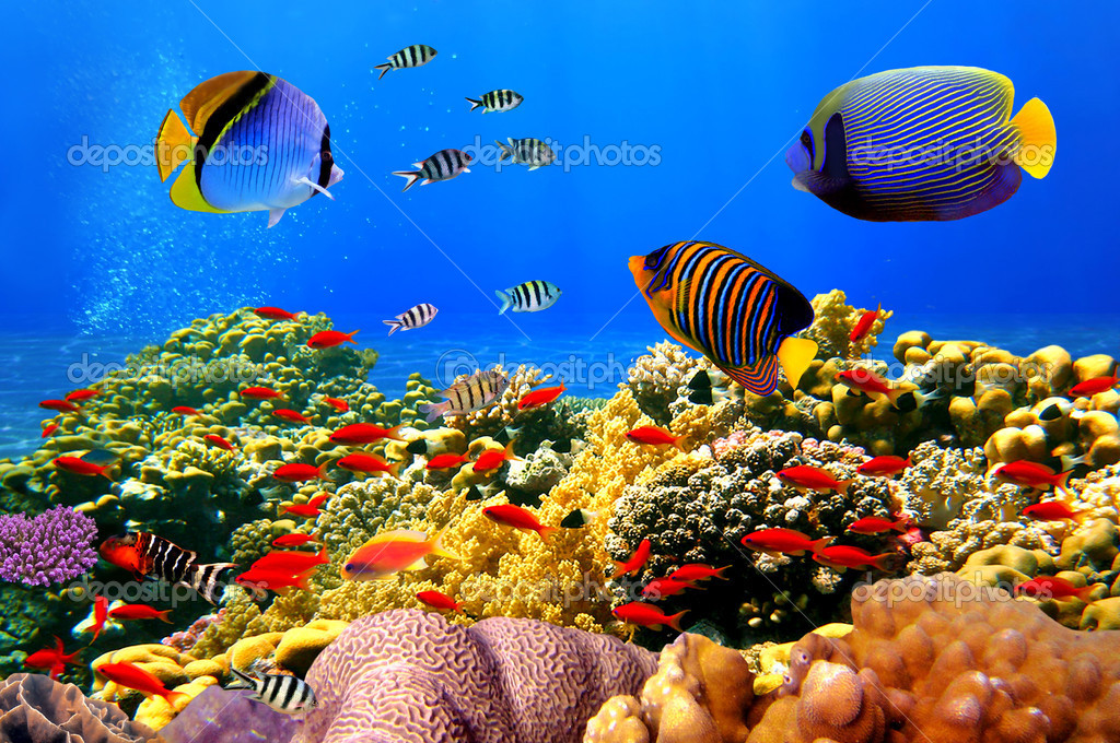 Фотообои Photo of a coral colony on a reef, Egypt