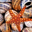 Sea Shell and Starfishl — Stock Photo