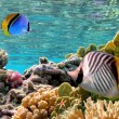 Threadfin butterflyfish (Chaetodon auriga) — Stock Photo