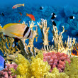 Stock Photo: Tropical Fish and Coral Reef