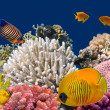 Underwater life of hard-coral reef, Red Sea, Egypt — Stock Photo #5942923