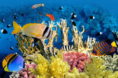 Tropical Fish and Coral Reef — Stock Photo