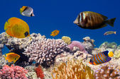 Underwater life of a hard-coral reef — Stock Photo