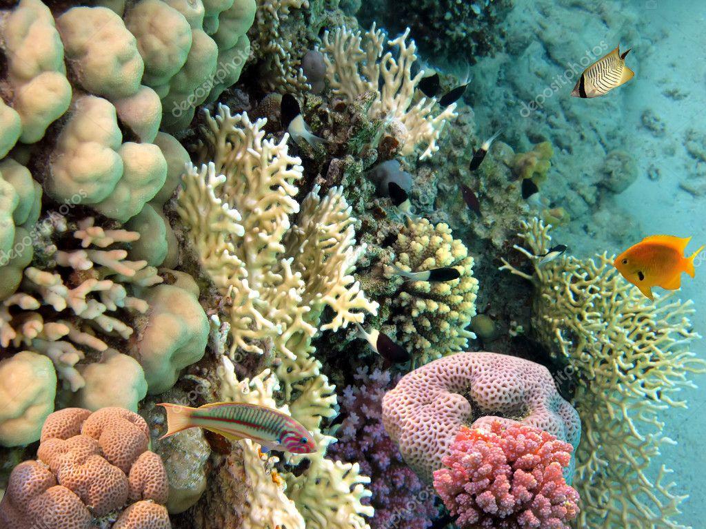 Фотообои Фото коралловые колонии, Красное море, Египет