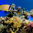 Stock Photo: Tropical Fishes