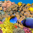 Photo of a coral colony on a reef, Egypt — Stock Photo #6098205