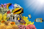 Photo of a coral colony on a reef top — Stock Photo