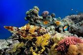 Klottrade leatherjacket filefish (aluterus scriptus) — Stockfoto
