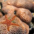 Starfish — Stock Photo #6170198