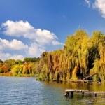 Autumn landscape Colorful trees in lake of Ukraine — Stock Photo