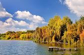 Autumn landscape Colorful trees in lake of Ukraine — Foto Stock