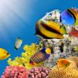 Zdjęcie kolonii koralowców na szczycie rafy — Zdjęcie stockowe