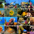 Set of 16 tropical fishes close-up — Stock Photo