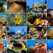 Set of 16 tropical fishes close-up — Foto de Stock