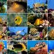 uppsättning av 16 tropiska fiskar närbild — Stockfoto