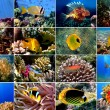 Set of 16 tropical fishes close-up — Stock Photo #6450904