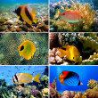 Tropical fish collection on white background - Photo
