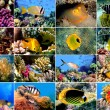 Set of 16 tropical fishes close-up — Stock Photo #6451003