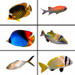Tropical fish collection on white background — Stock Photo