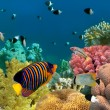 Underwater panorama with Angel fish, coral reef and fishes. Red - Stock Photo