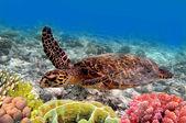 Grüne meeresschildkröte, die schwimmen im meer — Stockfoto