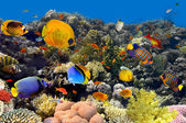 Coral and fish — Stockfoto