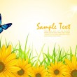 Vector background with yellow sunflowers, green grass and butter — Stock Vector