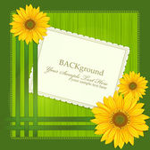 Vector green background, with Sunflowers ribbons and greeting ca — Stock Vector