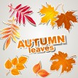 Vector set: autumn leaves — Stock Vector