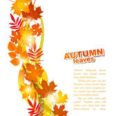 Vector background with autumn leaves — Stock Vector