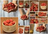Strawberry collage — Stockfoto