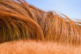 Horse mane texture — Stock Photo