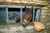 Cavallo e capra — Foto Stock