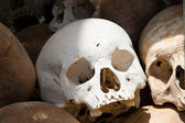 White skull from a mass grave of Khmer Rouge victims in Choeung Ek — Stock Photo