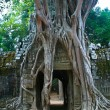 Banyroots growing on ruins of Wat TPhrom temple at Angkor — Stock Photo #5750063