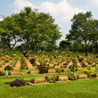 Thailand WW2 cemetery — Stock Photo #5752045