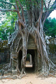 Banyan roots growing on the ruins of the Wat Ta Phrom temple at Angkor — Stock Photo