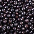 Ripe black currant - Stock Photo