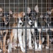 Many puppies locked in the cage — Stock Photo #6316463