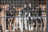 Many puppies locked in the cage — Stock Photo