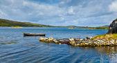 Panorama zatoki ardmore — Zdjęcie stockowe