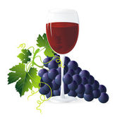 Blue grapes and wine — Stock Vector