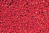 Cowberry or lingonberry (Vaccinium vitis-idaea ) — Stok fotoğraf