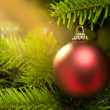 Stock Photo: Red ball in real CaucasiFir Christmas tree