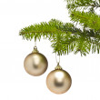 Foto Stock: Two golden decoration balls in Christmas tree branch