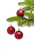 Three red decoration balls in Christmas tree branch — Stock Photo