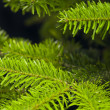 Green branches of a Christmas tree — Stock Photo #6224751