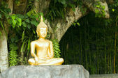 Buddha statue under green tree in meditative posture — Stock Photo