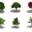 3d trees pack with shadows — Stock Photo