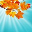 Red yellow fall maple leafs over sky. EPS 8 - 图库矢量图片